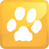 Pet urine and odor removal services